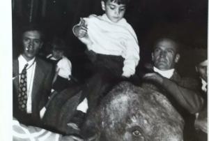 Victor elefante
