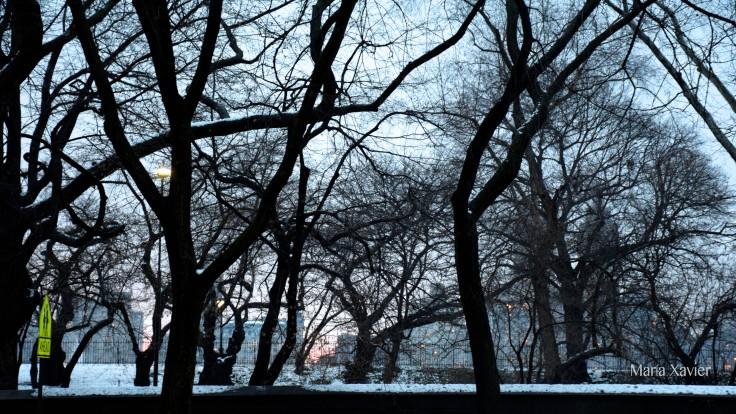 Central Park desde Guggenheim